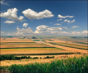 endless_fertile_fields_by_jup3nep-d6kzme8