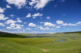 green field 2 (1)